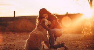 do Golden Retrievers love their owners