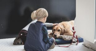 best orthopedic dog bed for Golden Retriever