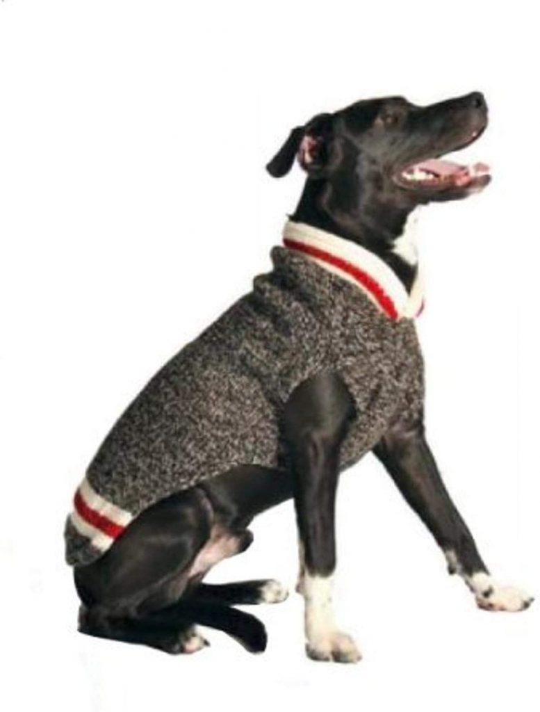 dog clothes for golden retrievers