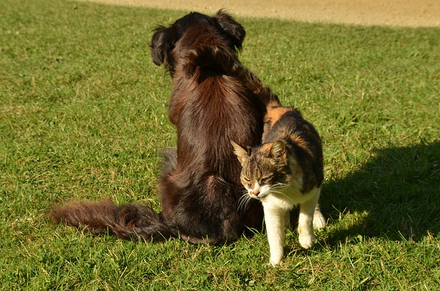 do golden retrievers get along with cats