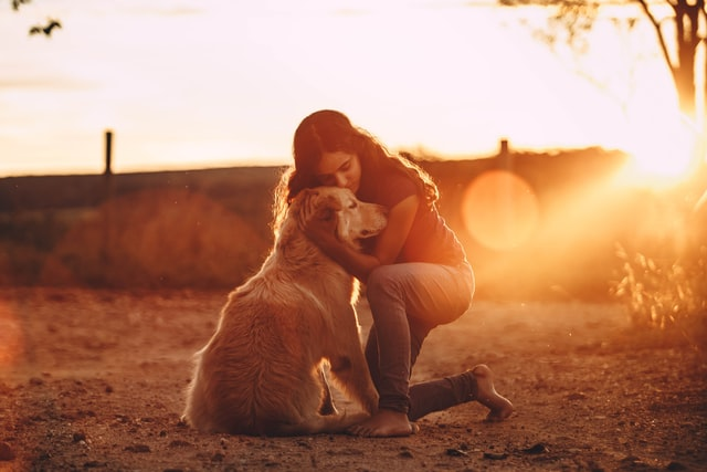Golden Retriever service dog for anxiety